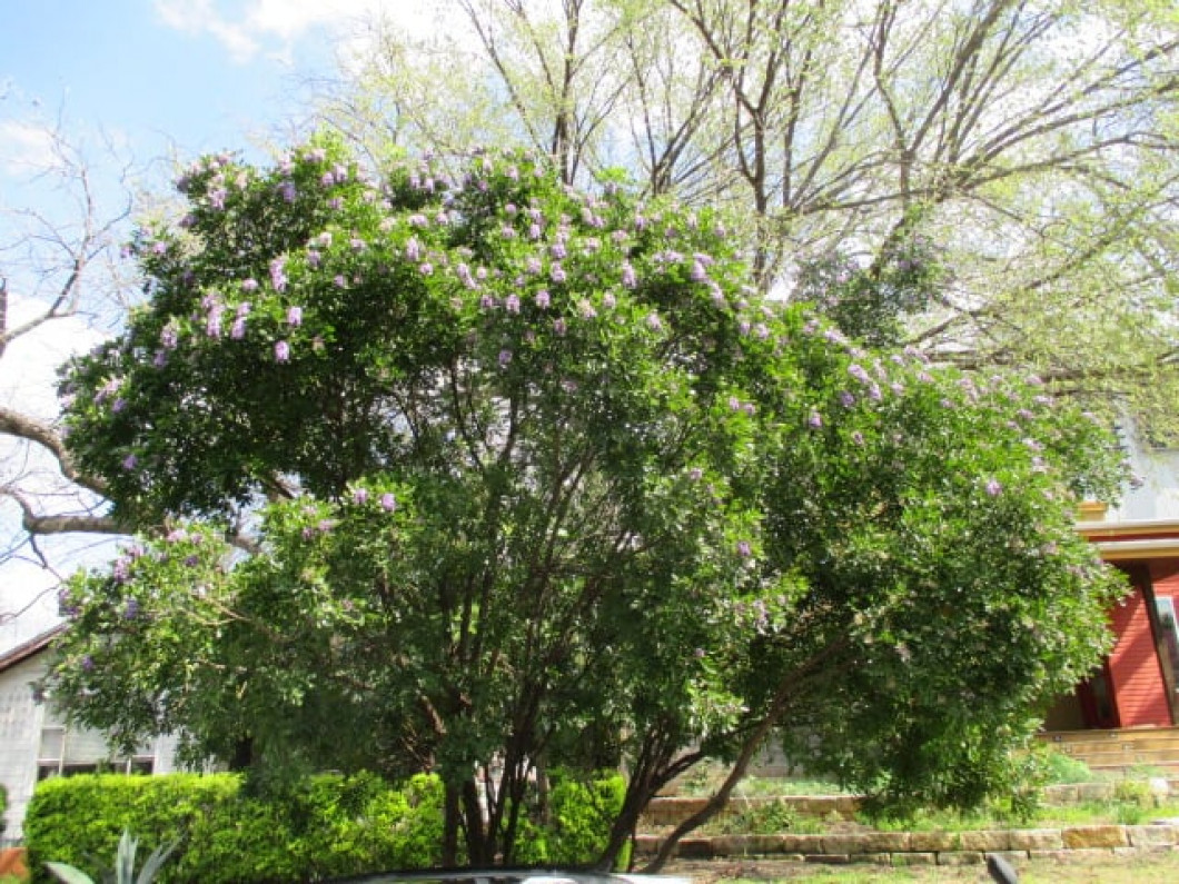 Enjoy the Benefits of Hiring an Arborist from Hill Country Arborist